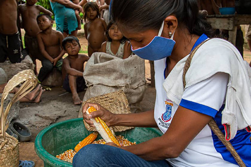 An indigenous woman removes kernels from an ear of corn. She is wearing a face mask.