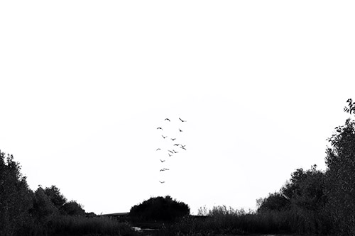 A black and white image shows a flock of birds rising into the sky from a tree.