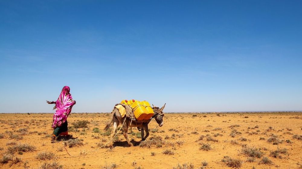 Drought in Somalia forces displacement, posing particular challenges for women...